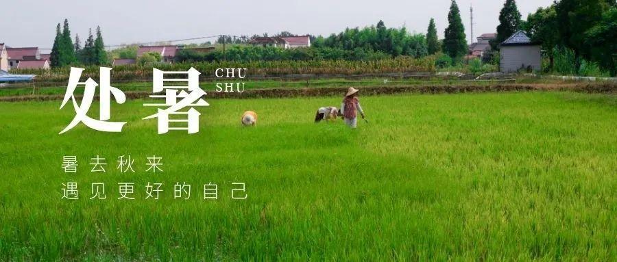 二十四节气农耕文化之处暑养生记